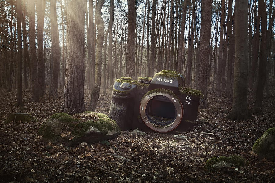 lost camera of the forest